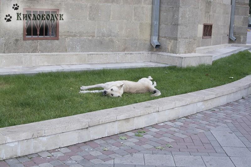 собака-отдыхака