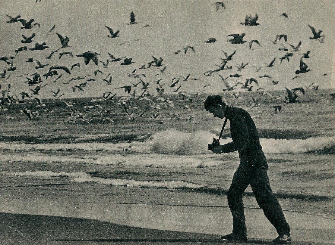 "Чайки приглашают в царство гейзеров. Фото Н. Гридина. Издательство ""Планета"". 1970"