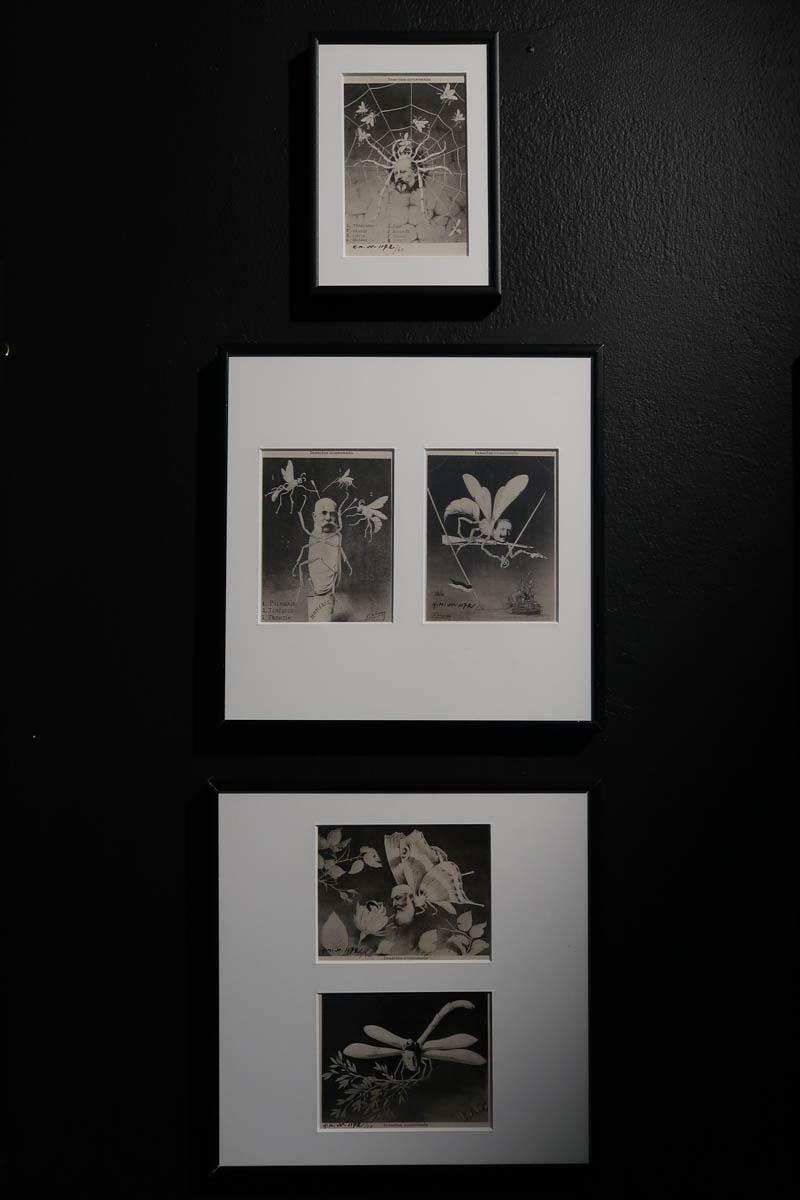 """Открытки из серии """"Коронованные насекомые"""". не позднее 1904г."""
