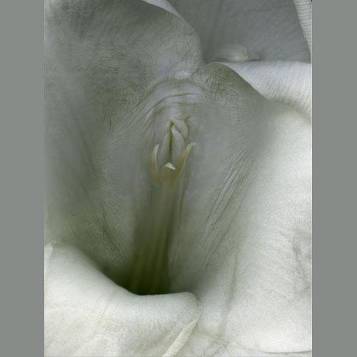 vlagalishe-rozi
