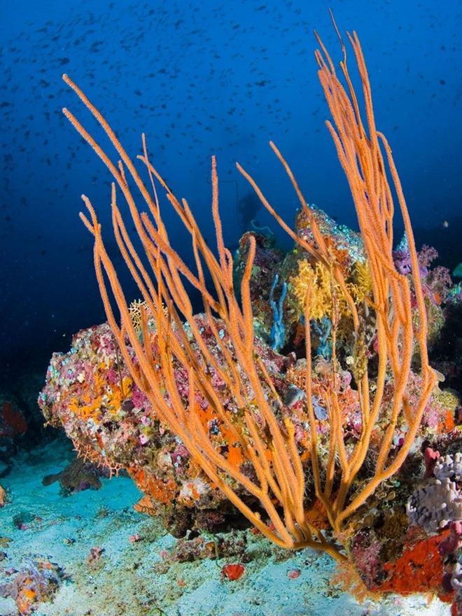 Подводные жители