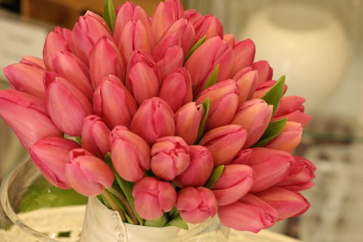 что женщины цветы тюльпаны фото букеты огромные нас