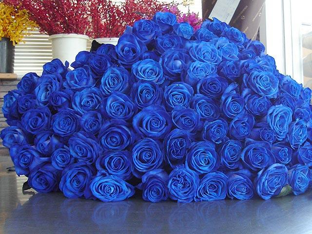 Картинки синие розы с днем рождения - 5