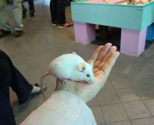 mouse s