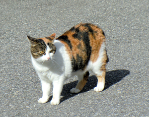 neighbour cat s