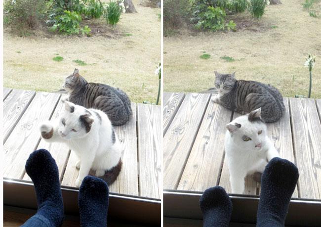 Feet and a cat XD katriona_s \u2014 LiveJournal