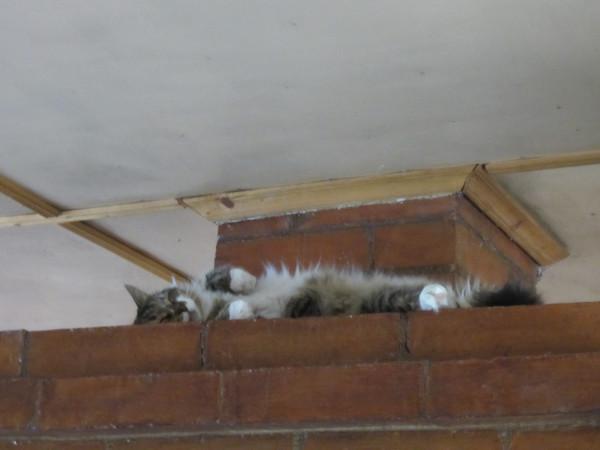Кот на печке