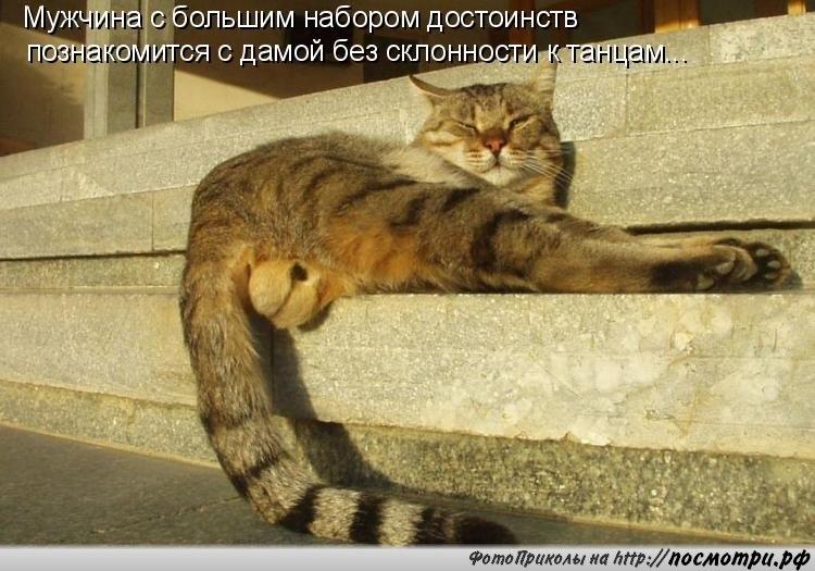 кот 3