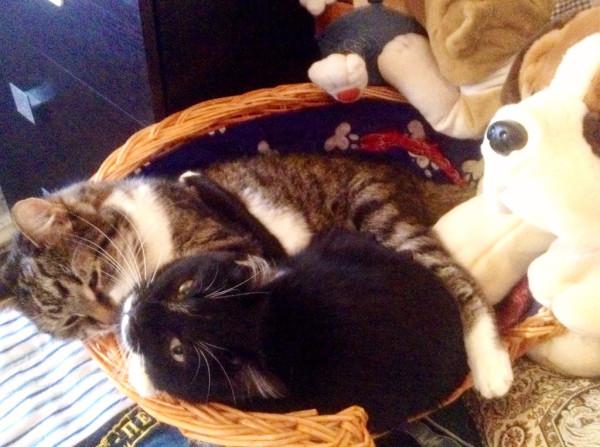мои котики2