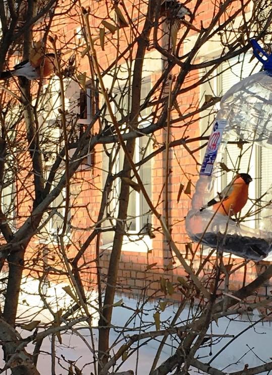 Птичий четверг. Зимний