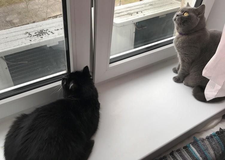 Пятничные котики. Гошик и птички.