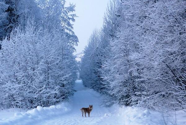 зима4
