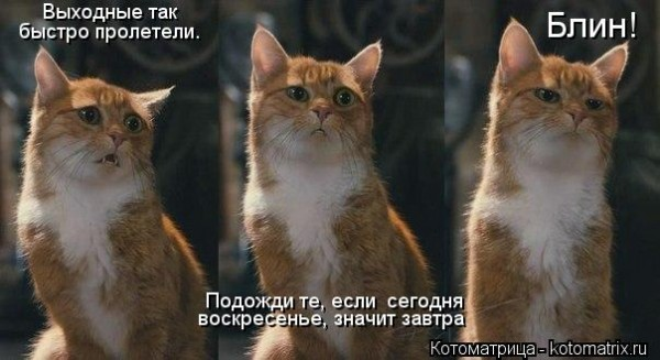kotomatritsa_yv