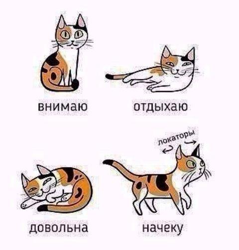 котики 5