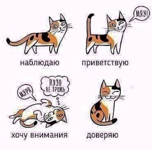 котики2