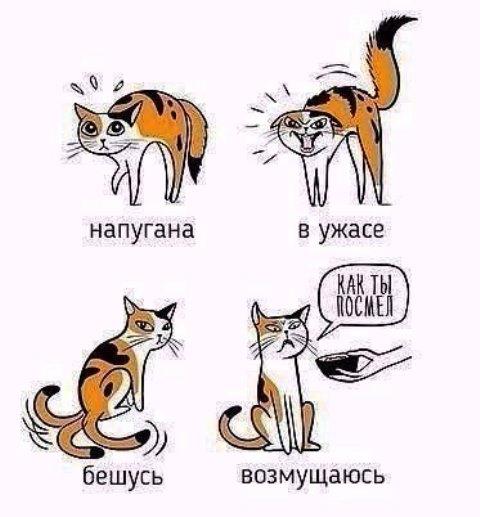 котики3