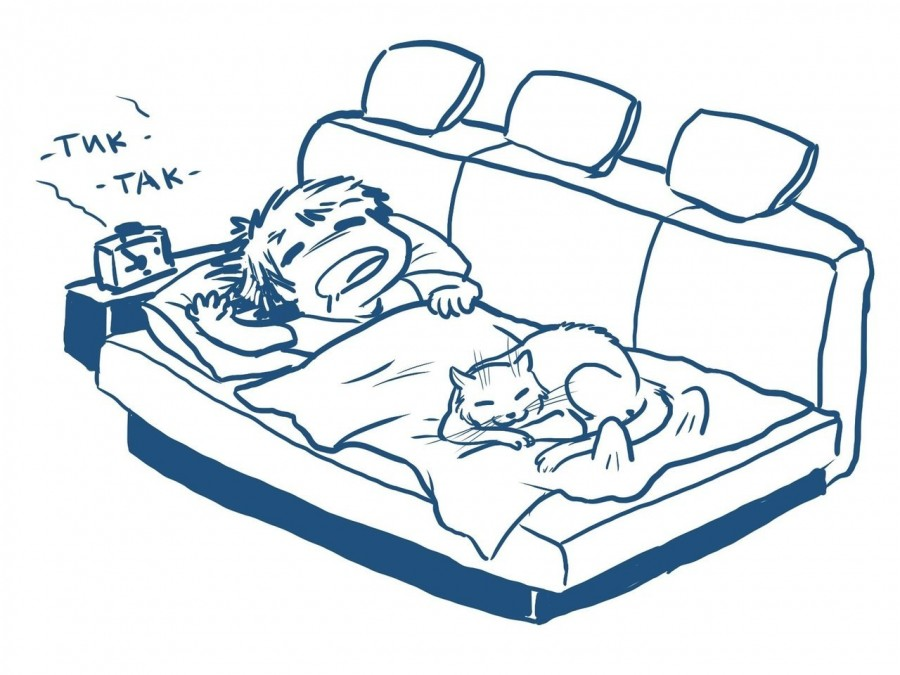 Когда живешь с кошкой1