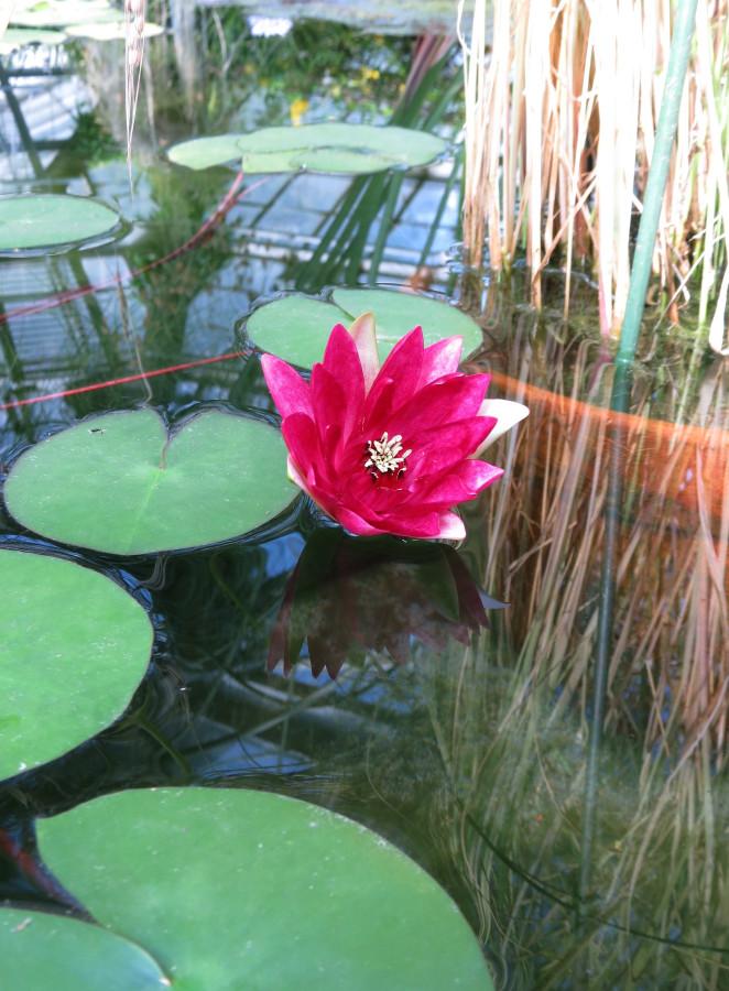 Сад водяного