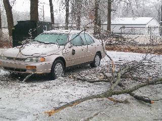 Downed branch and power line