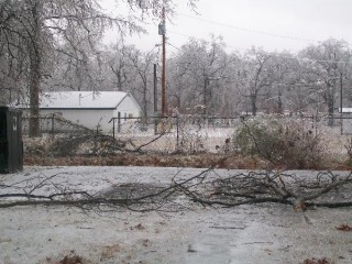 Downed Branches and Fence