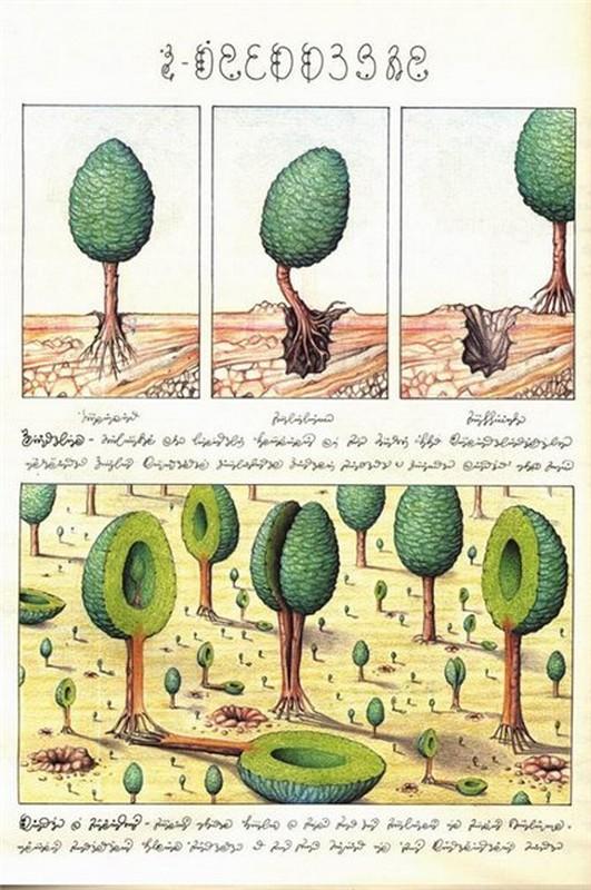 Codex seraphinianus - загадочная книга о выдуманном мире 12