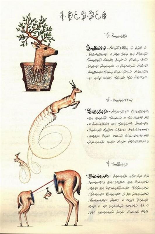 Codex seraphinianus - загадочная книга о выдуманном мире 15