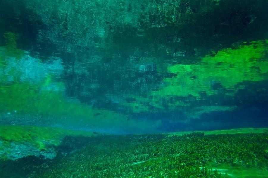 Лесное озеро Rotomairewhenua - самое прозрачное в мире озеро 4
