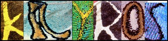 Алфавит из рисунков на крыльях бабочек