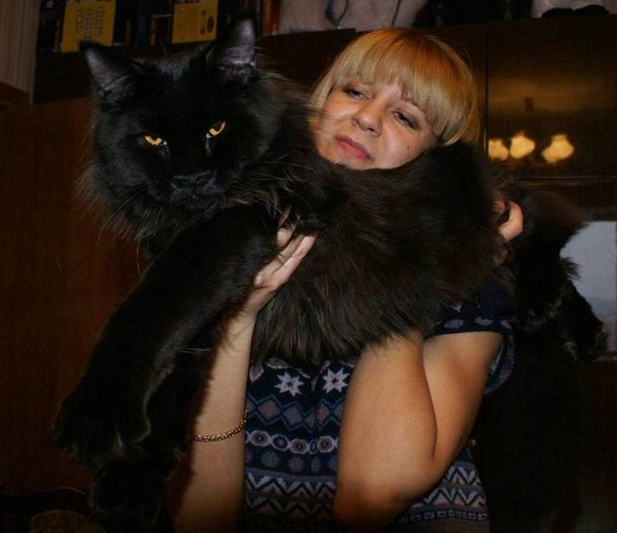 Коты породы Мейн-кун и их внешность 12