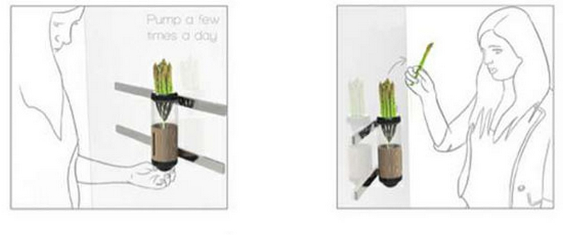 Гидропонный сад в вашем доме - это возможно уже сегодня 8