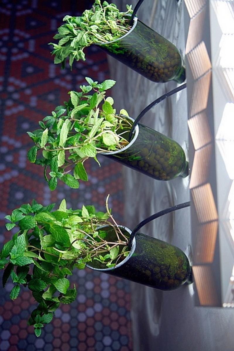 Гидропонный сад в вашем доме - это возможно уже сегодня 10