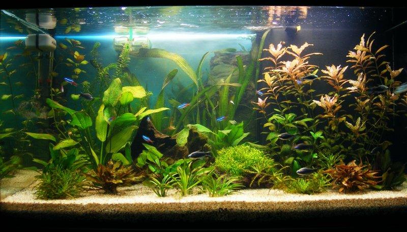 Виды аквариумов выбери идеальный вариант 1