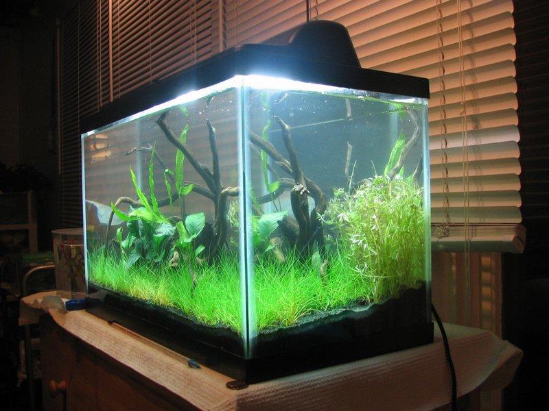 Виды аквариумов выбери идеальный вариант 3
