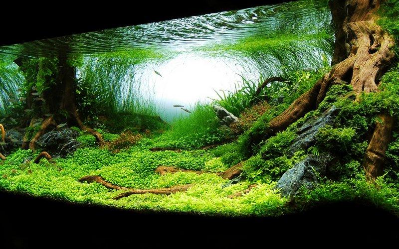 Виды аквариумов выбери идеальный вариант 4