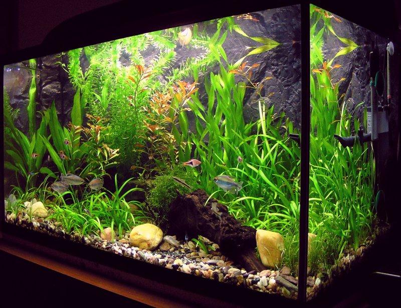 Виды аквариумов выбери идеальный вариант 5