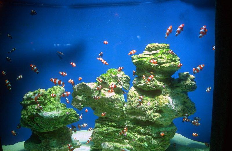 Виды аквариумов выбери идеальный вариант 6