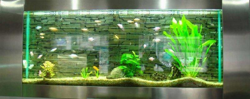 Виды аквариумов выбери идеальный вариант 8