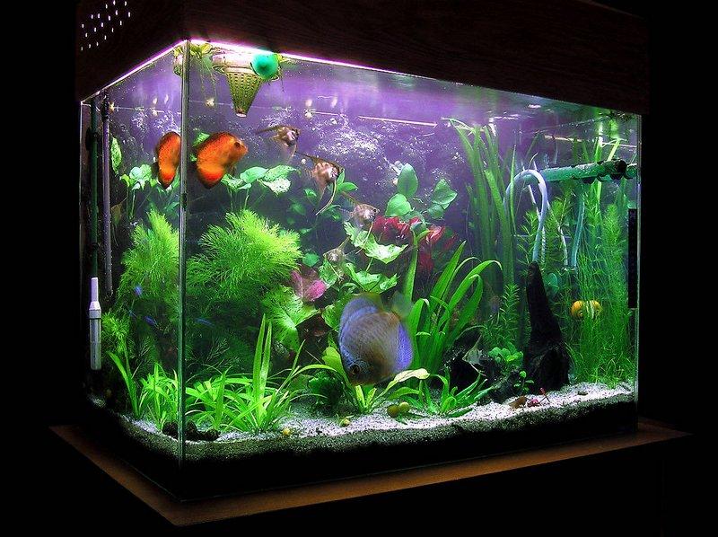 Виды аквариумов выбери идеальный вариант 9