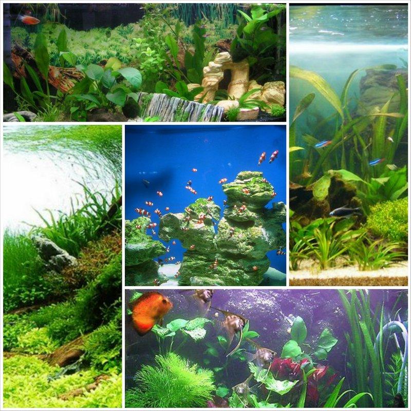 Виды аквариумов выбери идеальный вариант