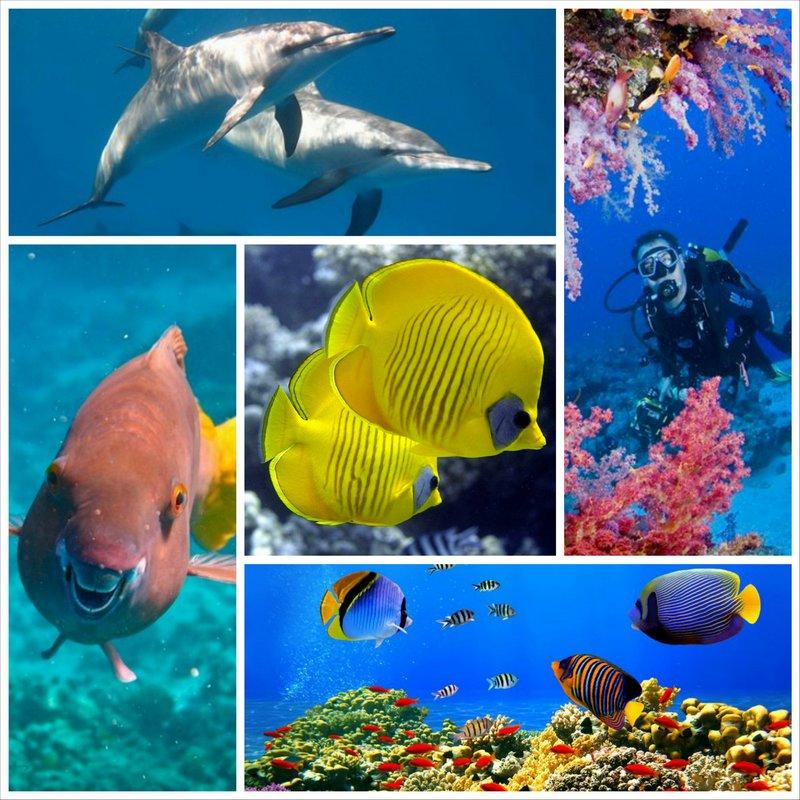 Рифы Красного моря - второй дом для дайвера