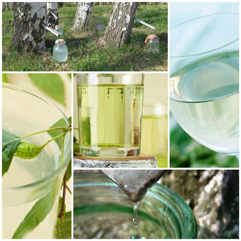 Березовый сок и его польза для организма