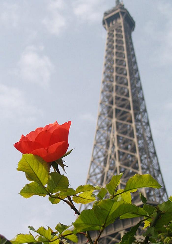Оригинальные фото Парижа 71