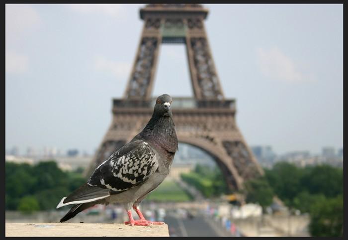 Оригинальные фото Парижа 97