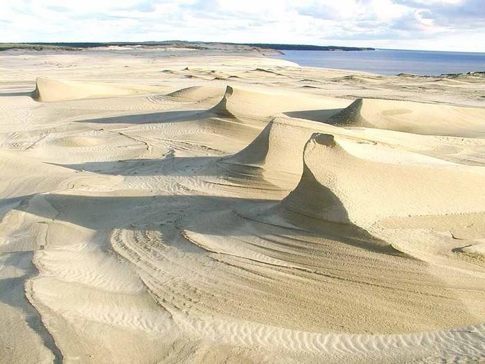 Удивительный национальный парк Куршская Коса 1