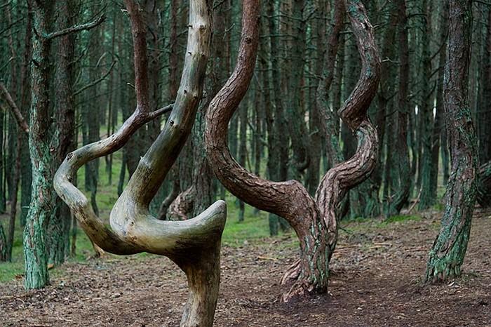 Удивительный национальный парк Куршская Коса 4