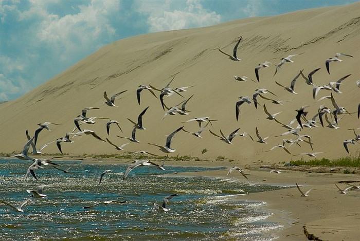 Удивительный национальный парк Куршская Коса 7