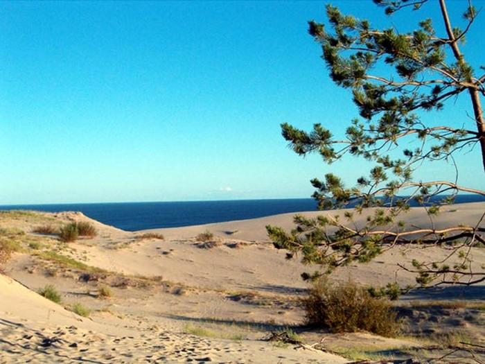 Удивительный национальный парк Куршская Коса 9