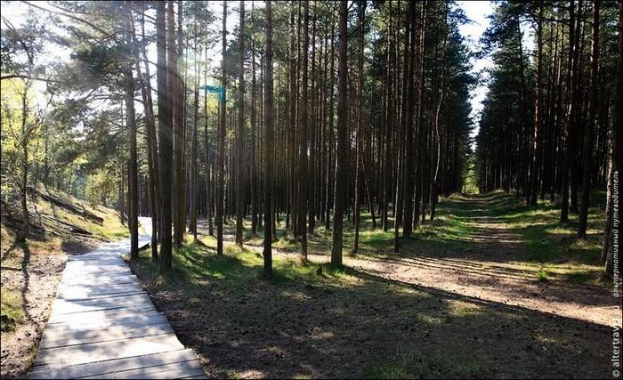 Удивительный национальный парк Куршская Коса 13