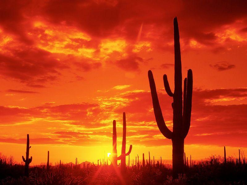 Красивые фото заката солнца - Burning Sunset, Saguaro National Park. Arizona