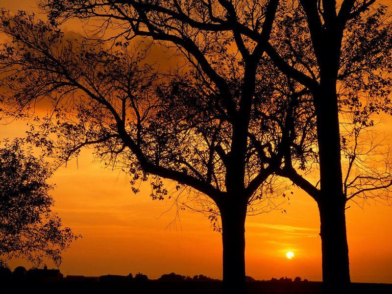 Красивые фото заката солнца - Elm Trees at Sunset, Illinois
